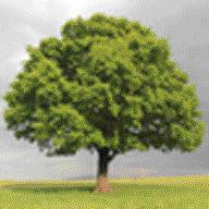 britishroyalfamilytree.com favicon